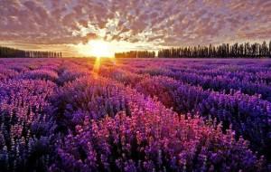 lauand-fields